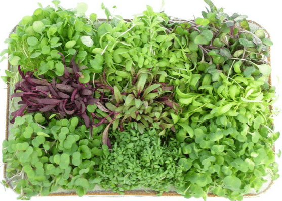 Microgreens nutritional benefits