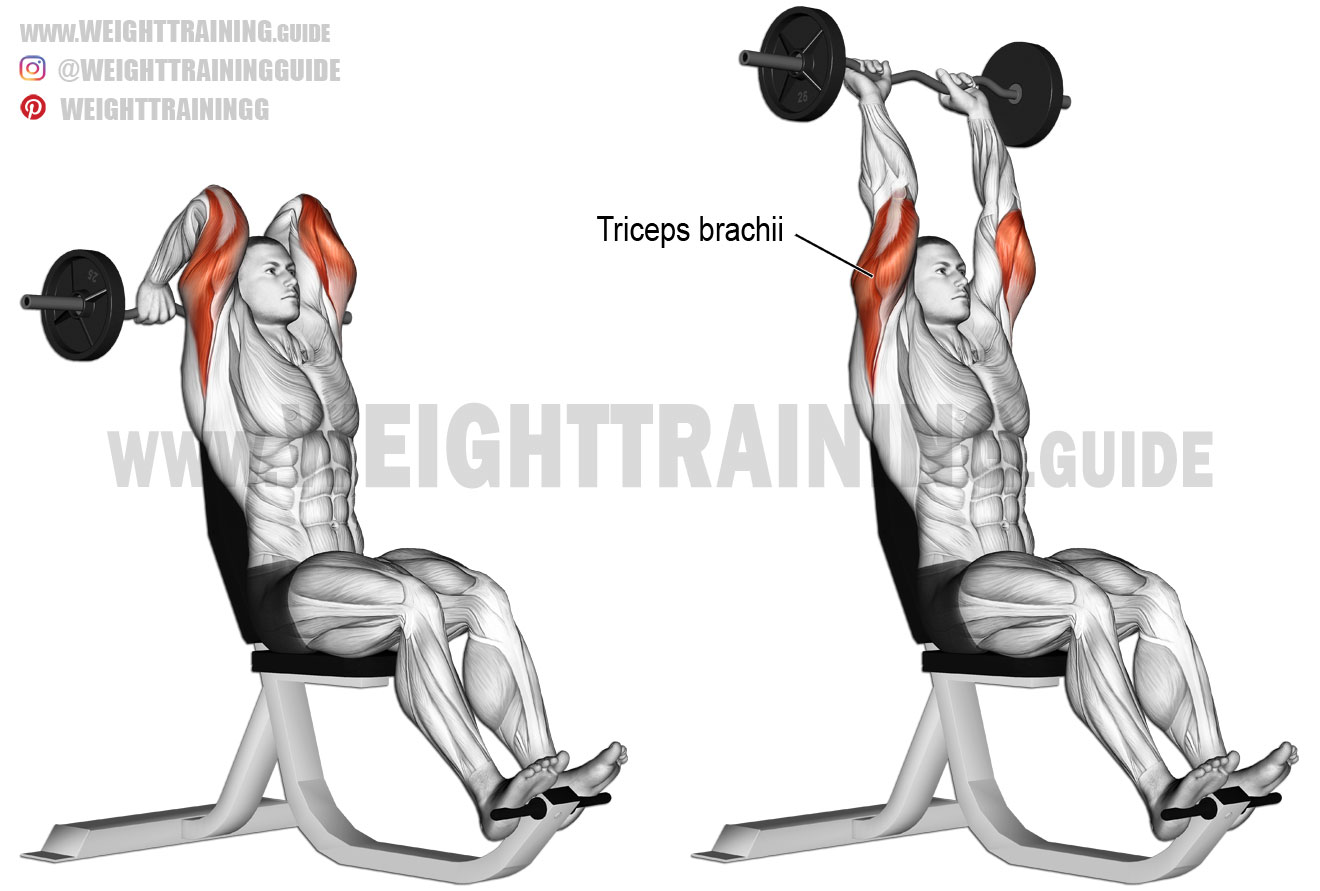 Overhead Ez Bar Triceps Extension Exercise Instructions