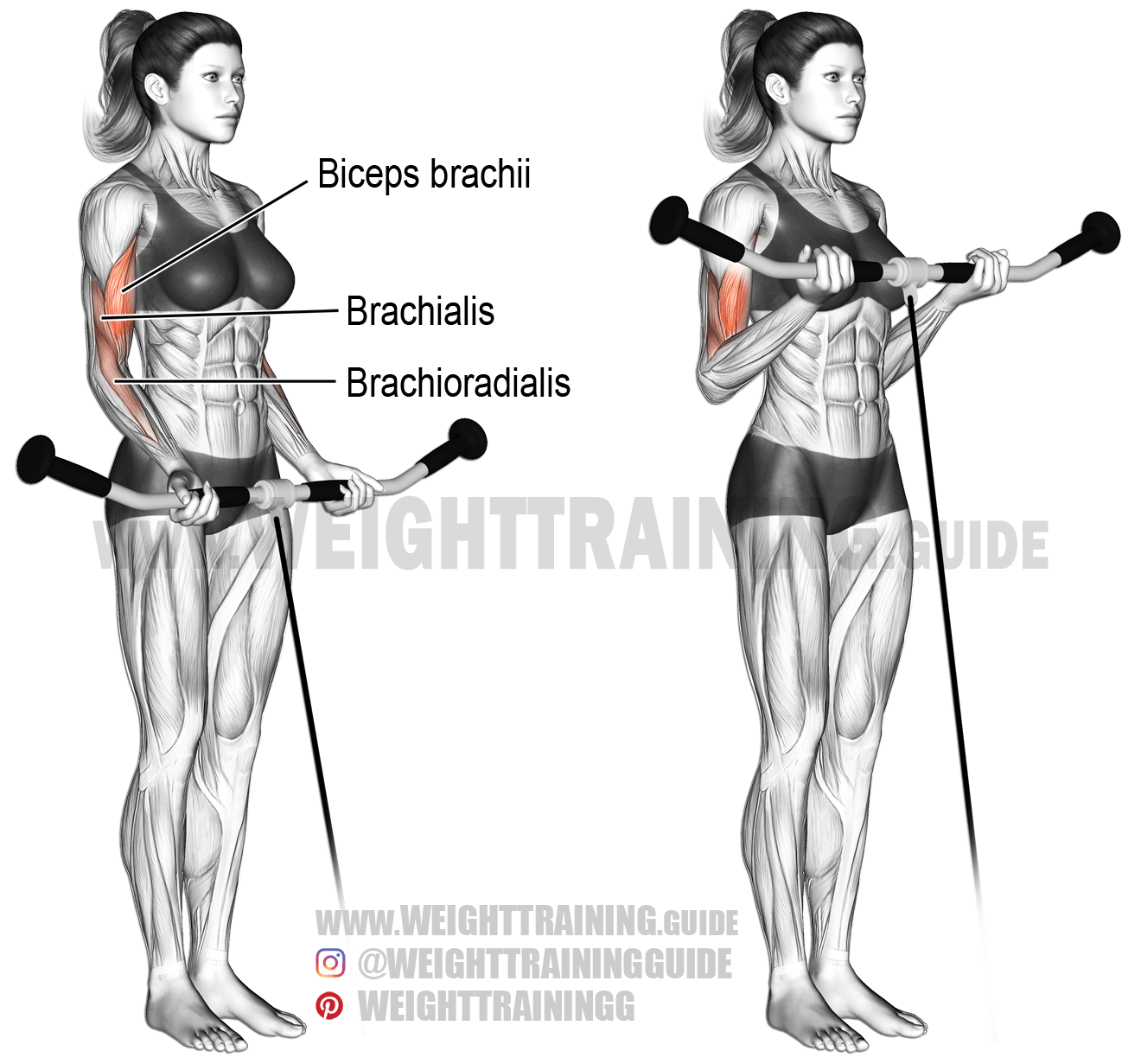 Cable Curl Exercise Instructions And Video
