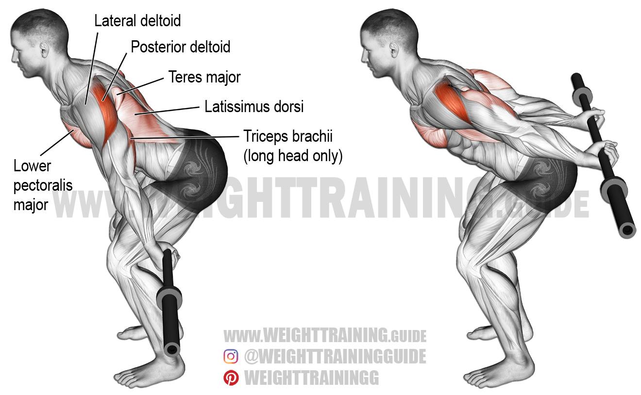 Bent-over barbell reverse raise exercise instructions and