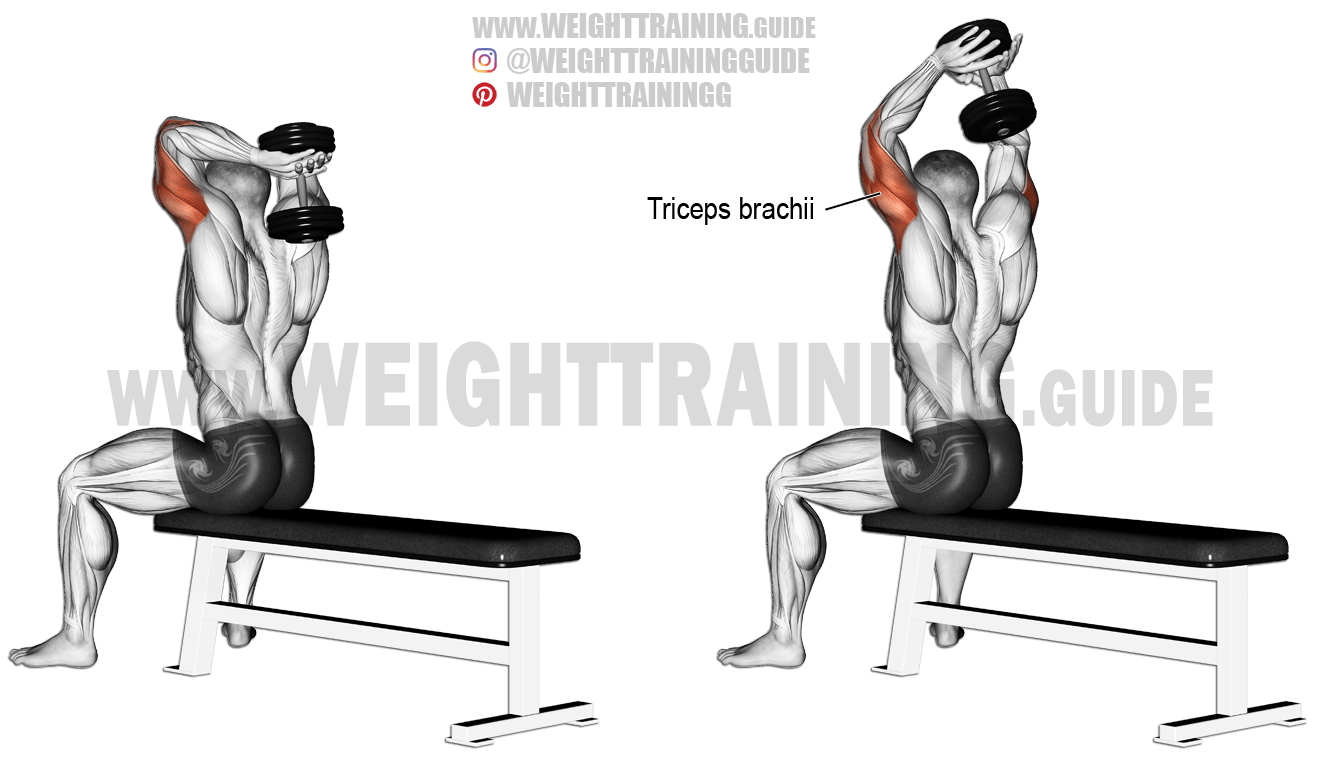 triceps brachii diagram telephone wire seated dumbbell overhead extension exercise
