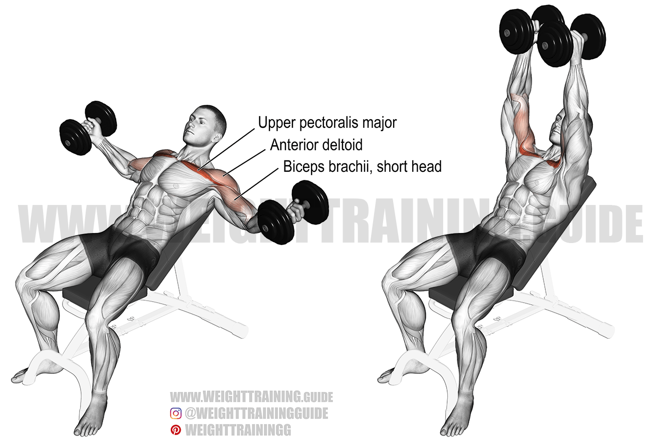 Incline dumbbell fly exercise instructions and video