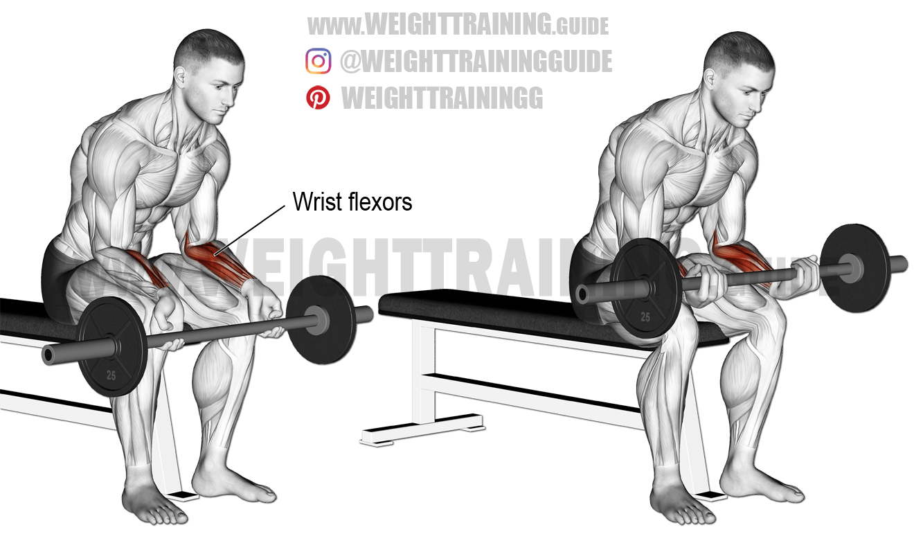 reverse wrist curl over bench