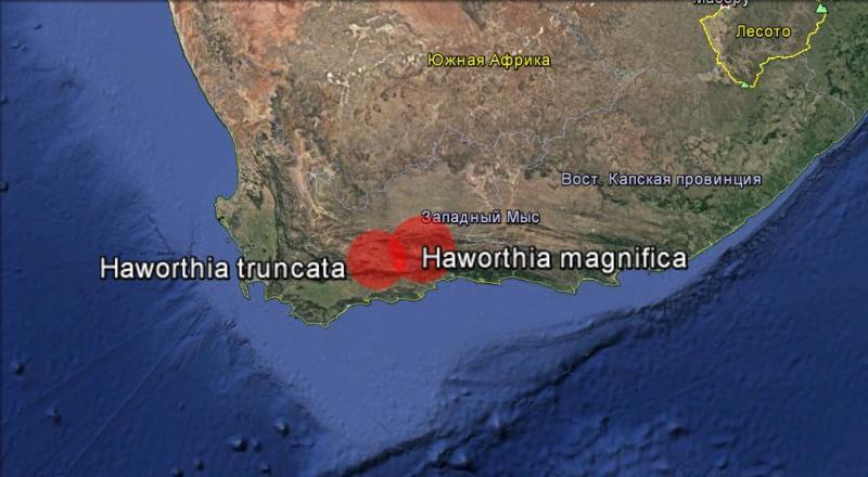Карта распространения Хавортия трунката и хавортия магнифика