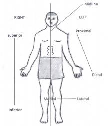 Medial Body Gallery