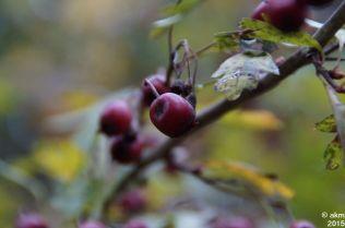 2015-10_25_Herbstpower07