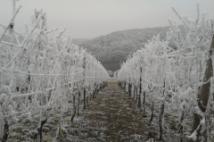 Winter Neumagen-Dhron