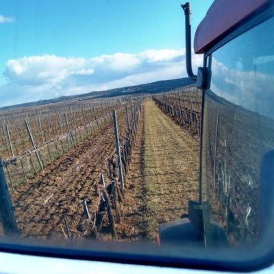 Weingarten im Rückspiegel