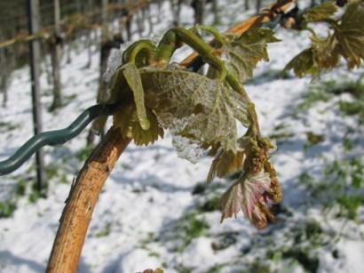 2017 – der détaillierte Weinlesebericht . . .