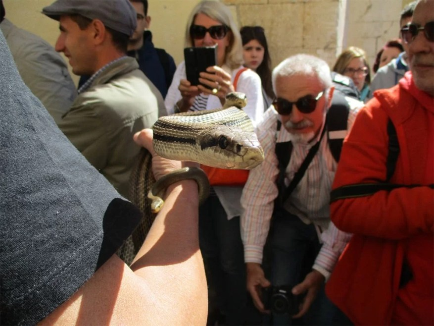 Festival of the Snake-Catchers in Italy