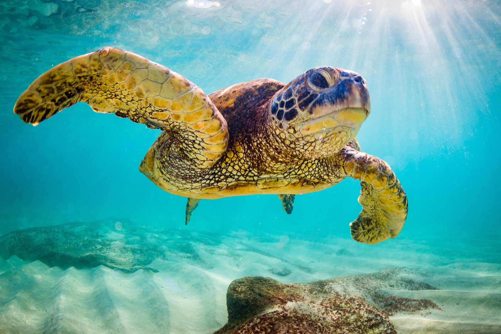 3 Interestingly Weird Sea Turtle Facts You Should Know