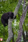 Bearly hanging on! The Great Smoky Mountains - Photo by Captain Brian