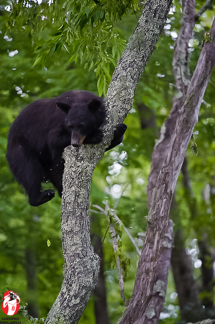 Bearly hanging on!