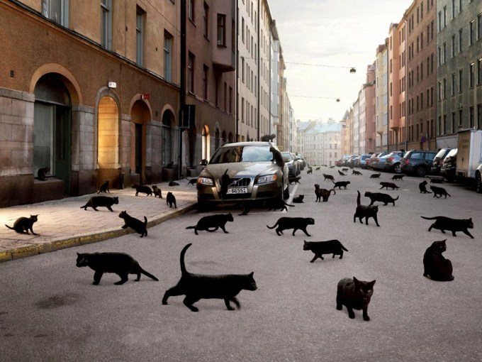 Black-cats-in-the-street