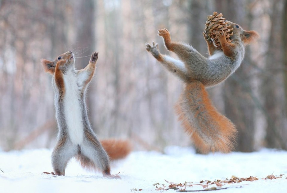 Playful_Squirrels4
