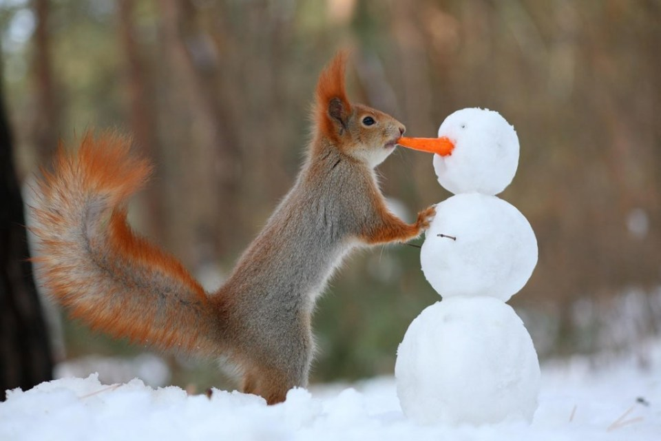 Playful_Squirrels5