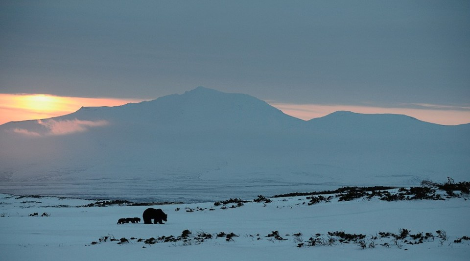 bears_kamchatka1