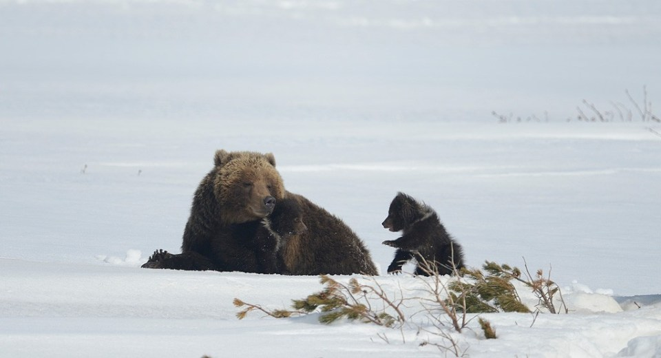 bears_kamchatka82