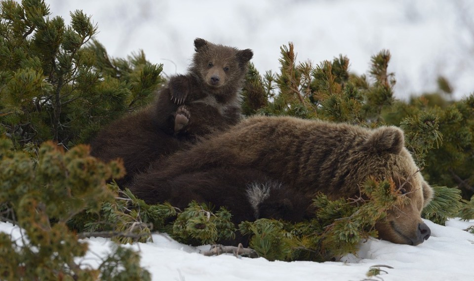 bears_kamchatka9