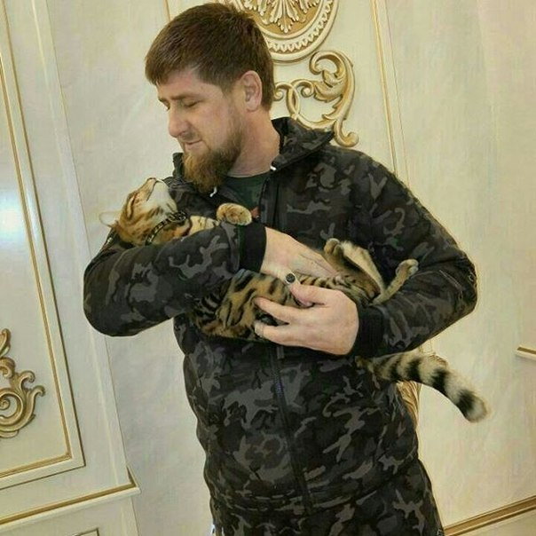 Kadyrov and his beloved cat