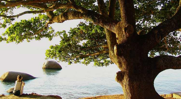Wer Bäume setzt, obwohl er weiß, dass er nie in ihrem Schatten sitzen wird, hat zumindest angefangen, den Sinn des Lebens zu begreifen. - Zitat von Rabindranath Tagore