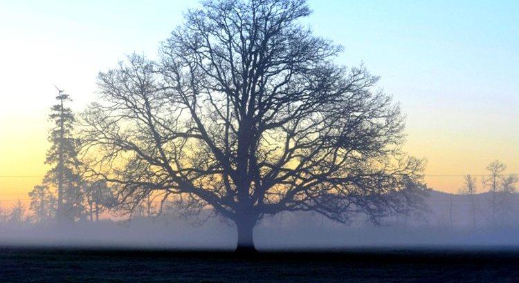 Bäume sind Gedichte, die die Erde in den Himmel schreibt. Wir fällen sie und verwandeln sie in Papier, um unsere Leere darauf auszudrücken. - Zitat von Khalil Gibran