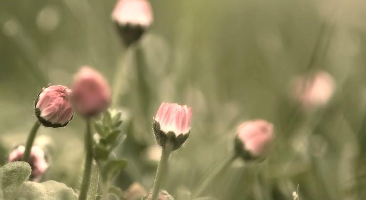 Das Beste im Leben ist, Verständnis für alles Schöne zuhaben. - Zitat von Menander