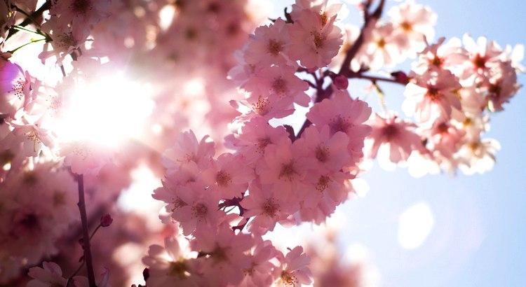 Lasst uns dankbar sein gegenüber Menschen, die uns glücklich machen. Sie sind die liebenswerten Gärtner, die unsere Seele zum Blühen bringen. - Zitat von Marcel Proust