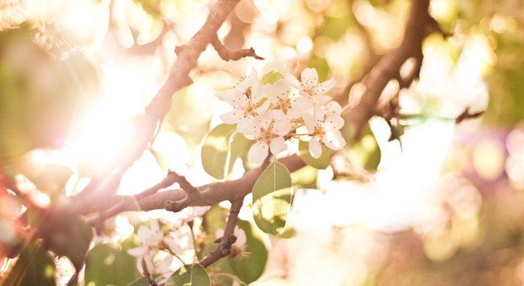 Was der Sonnenschein für die Blumen ist, dass sind lachende Gesichter für die Menschen. - Zitat von Joseph Addison