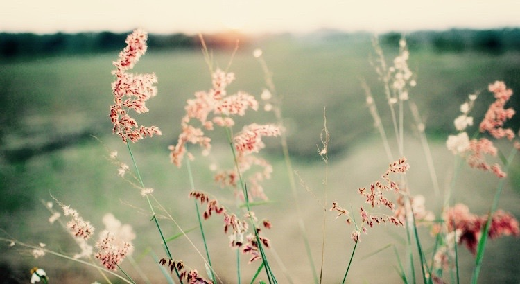 Es liegt eine wunderbare Heilkraft in der Natur. Oft gibt der Anblick eines schönen Abendhimmels, der Duft einer Blume, der bedrückten Seele Hoffnung und Lebensmut zurück. - Sophie Verena