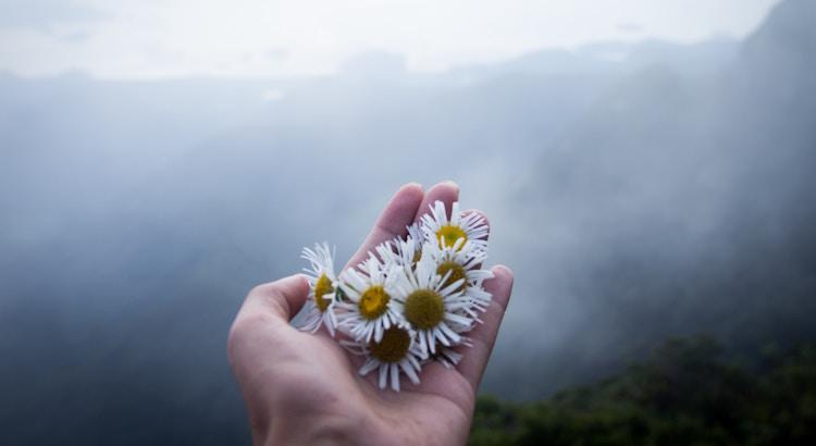Wenn es ein Gänseblümchen durch den Asphalt schafft, dann hast auch du die Kraft, immer einen neuen Weg zu finden. - Unbekannt