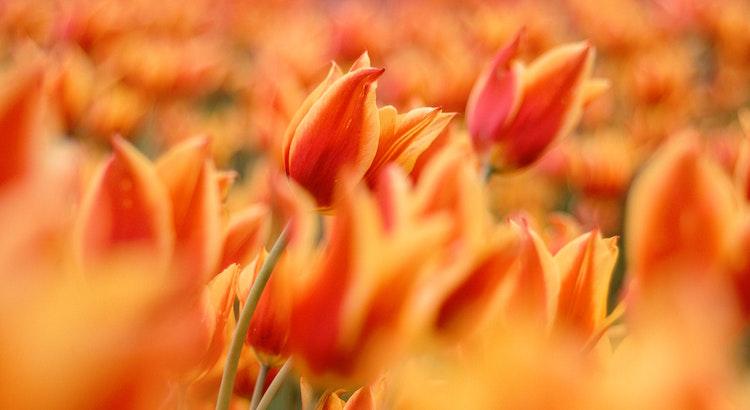 Geniess nach bester Lebensart das Schöne an der Gegenwart. Schon morgen ist von unserer Zeit ein weiteres Stück Vergangenheit. - Fred Ammon