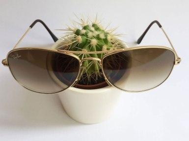 kaktusbrille2
