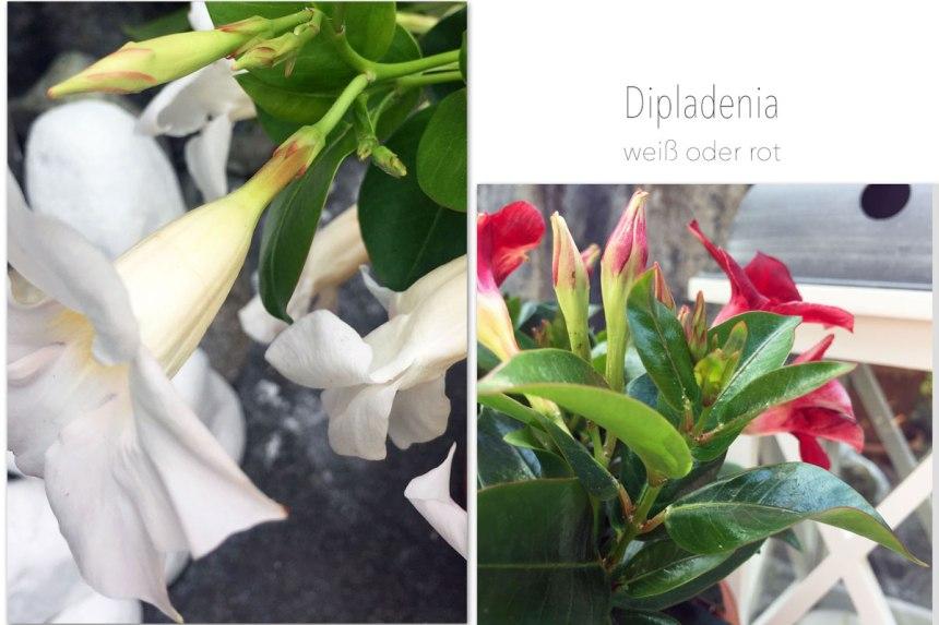 Sommerblumen-collage-1.jpg