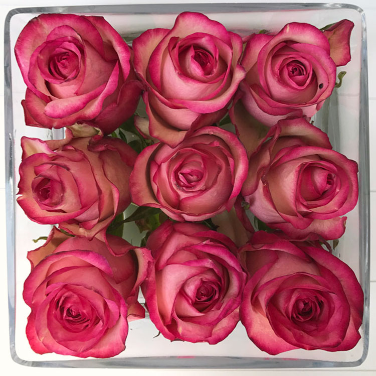 rose-wow2.jpg