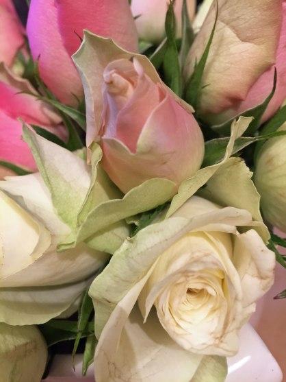 rosen-nah-natur1.jpg
