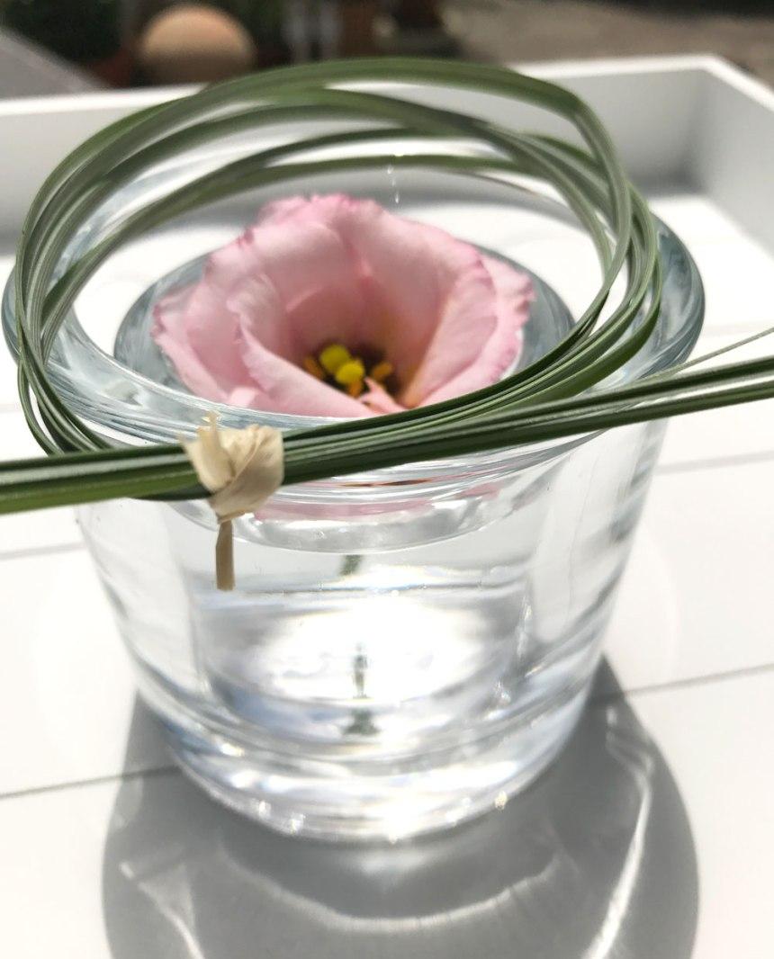 blume-rosa5.jpg