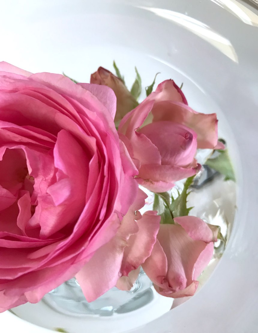rose-rosa3.jpg