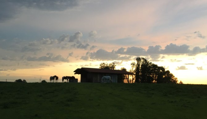abend-pferd.jpg