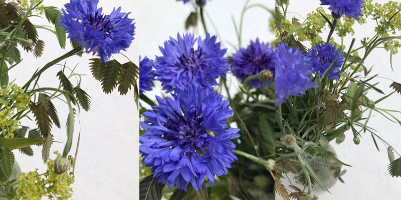 kornblumen-coll5.jpg