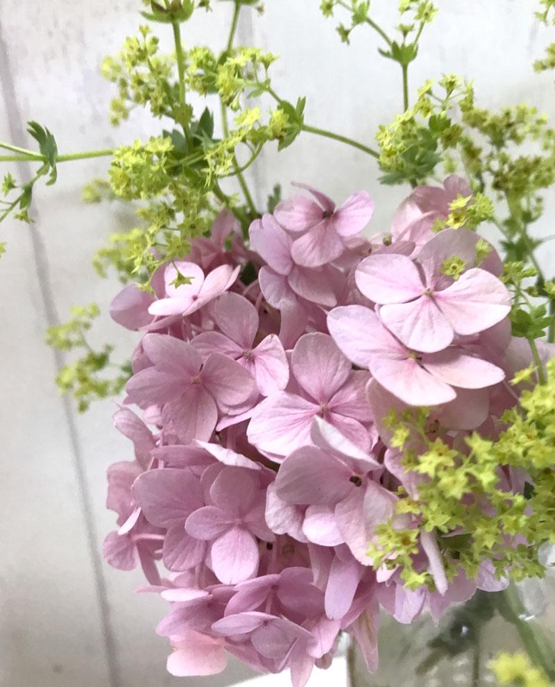 rosa-hortensie.jpg