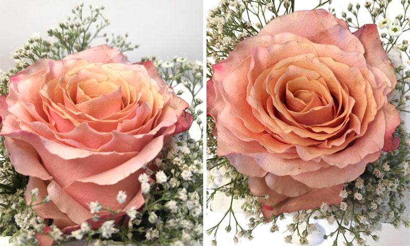 rosen-lachs-coll2.jpg
