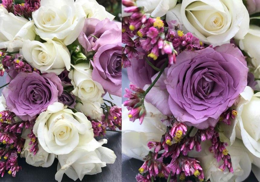 rose-lila-coll