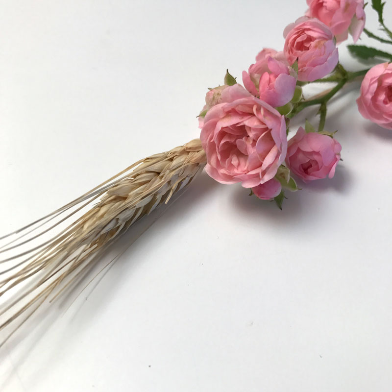 rosen-getreide13.jpg