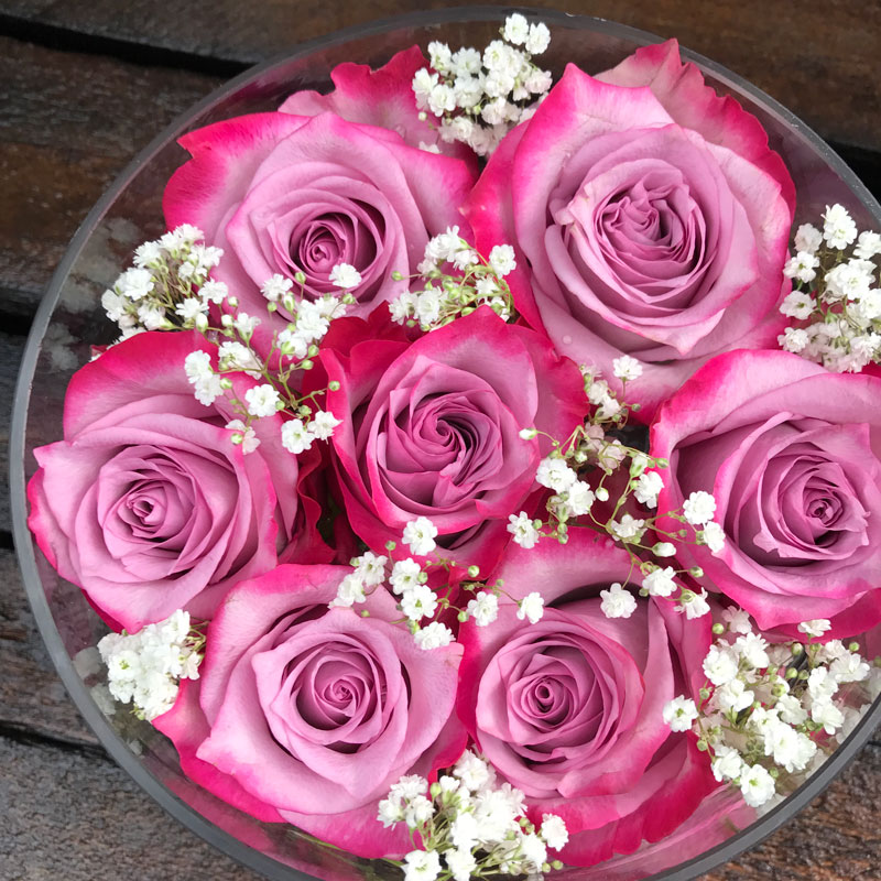 rosen-pink1.jpg