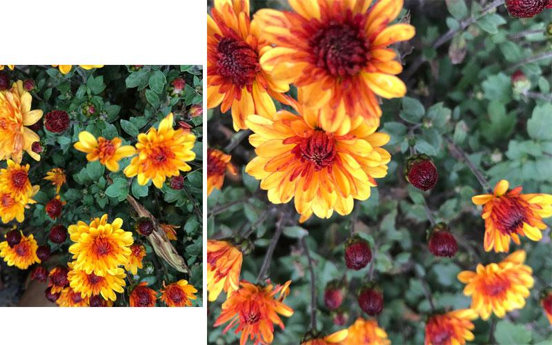 garden-coll.jpg