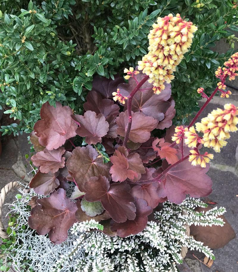 Herbstzeit Im Garten Weiss Schwarz