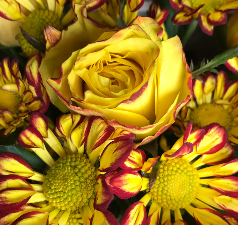 blumen-gelb4.jpg