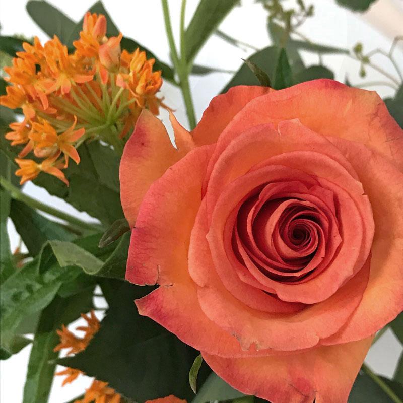orange-strauss67.jpg