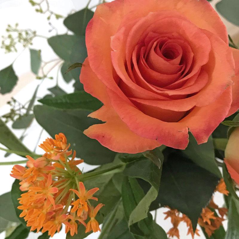 orange-strauss68.jpg